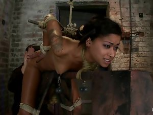 Kinky Skin Diamond gets hog tied and toyed from behind